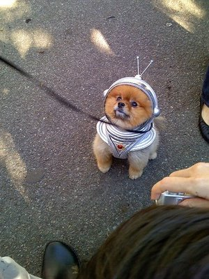Pomeranian funny