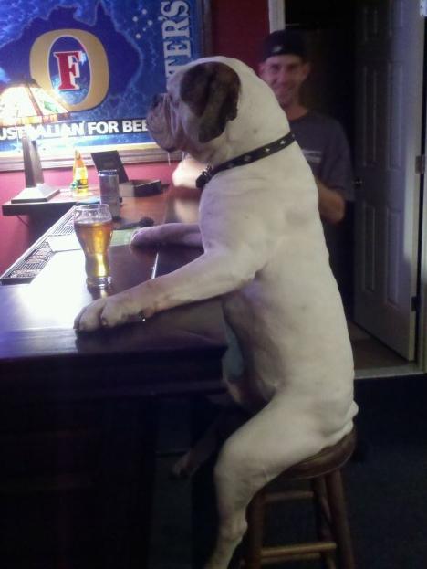 Beer dog funny