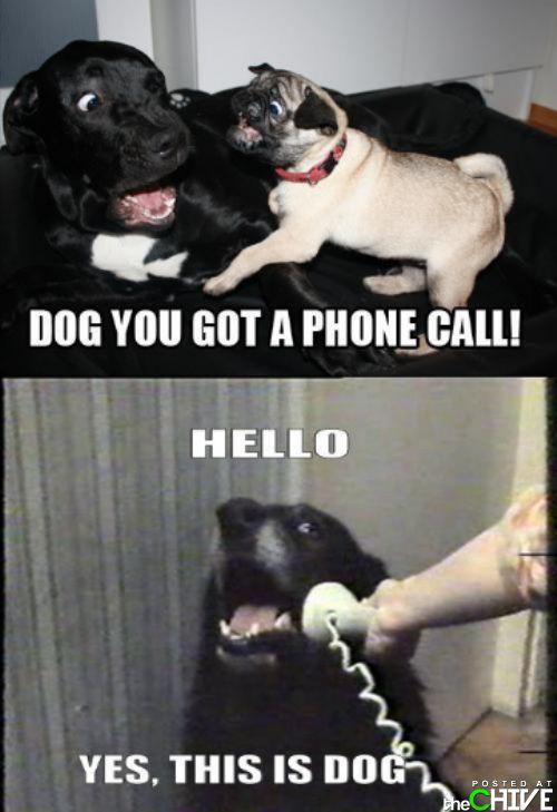 Dog you got a phone call!
