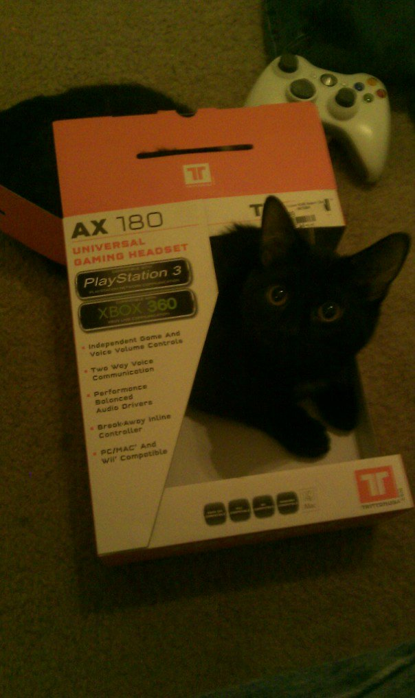 Headset cat