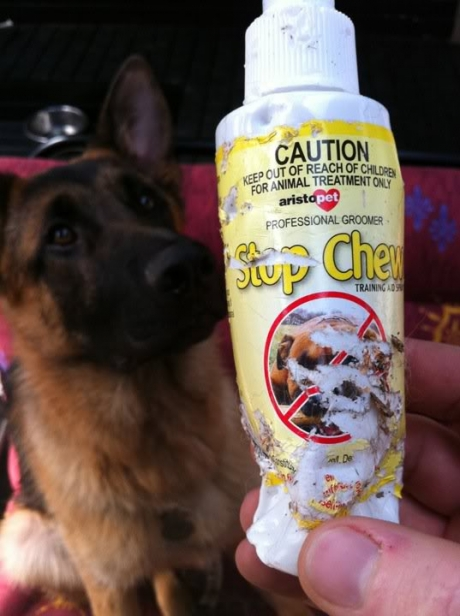 Stop chew fail