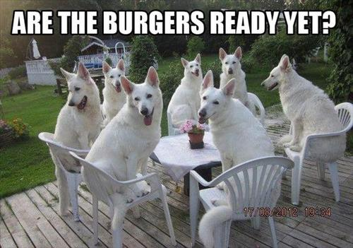 Are the burgers ready yet?
