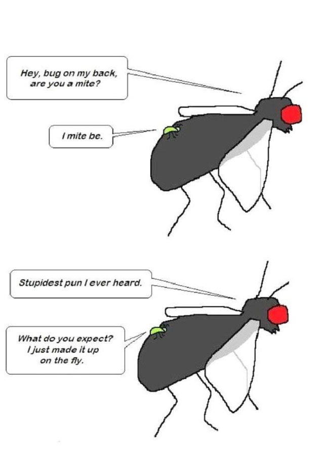 Hey, bug on my back, are you a mite?  I mite be. Stupidest pun I ever heard. What do you expect? I just made it up on the fly.