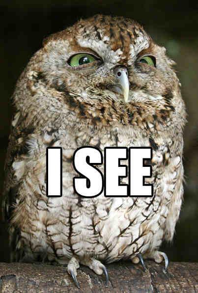 Owl I see