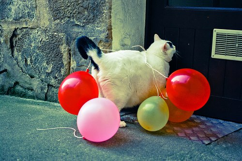 Balloons cat