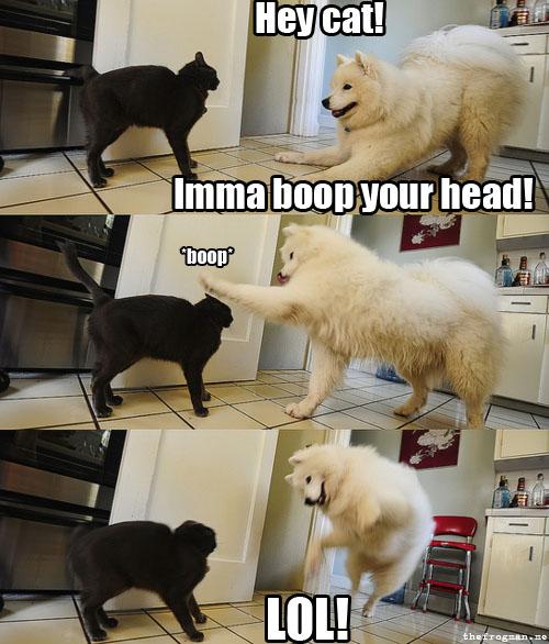 Hey cat!  lmma boop your head!