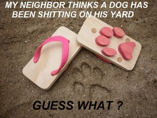 My neighbor thinks a dog has been pooping in his yard