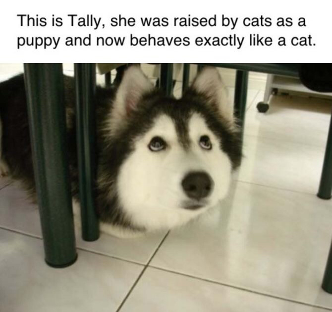 This is Tally, she was raised by cats as a puppy and now behaves exactly like a cat