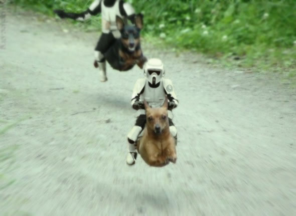 Stormtroopers riding dogs
