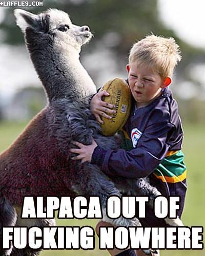 Alpaca out of fucking nowhere