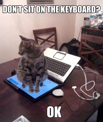 Cat don't sit on the keyboard