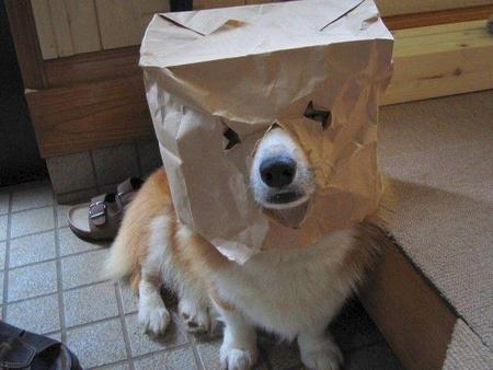Dog paperbag