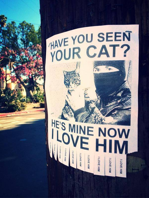 Have you seen your cat? He's mine now