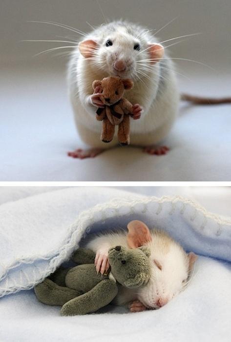 Rat plush