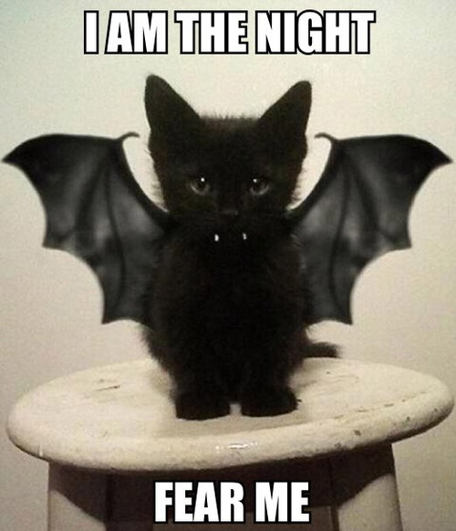 Cat I am the night