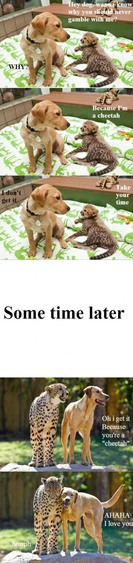 Funny cheetah