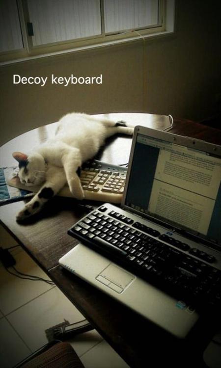 Decoy keyboard