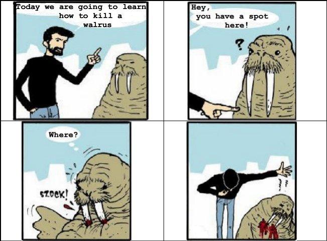 How to kill a walrus