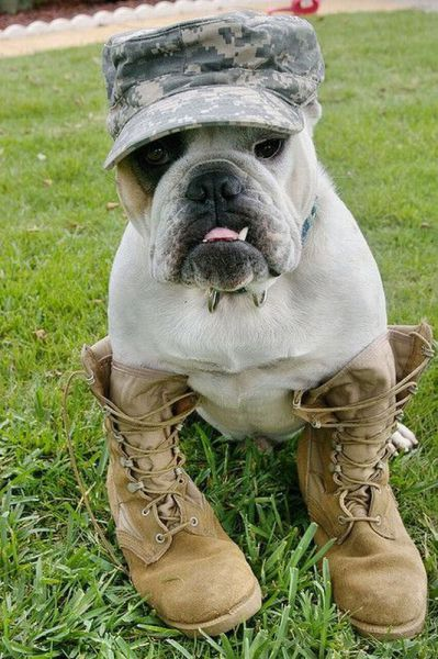 Cute army dog