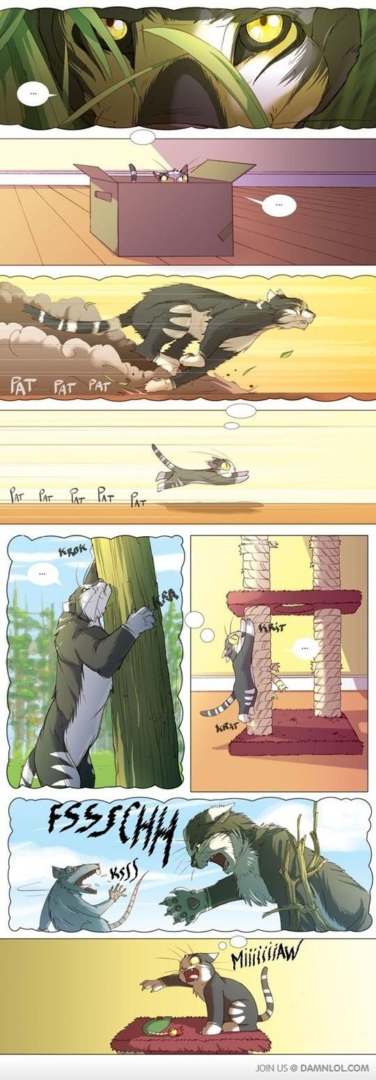 Cat imagination