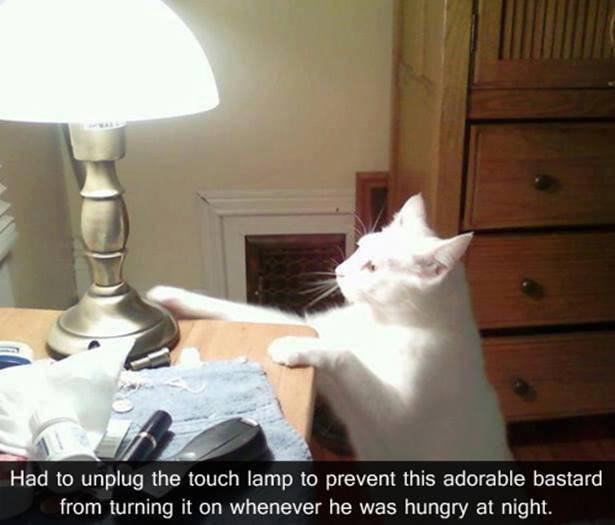 Cat with touch lamp