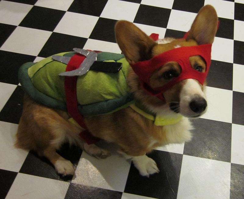 Teenage mutant ninja turtles dog costume
