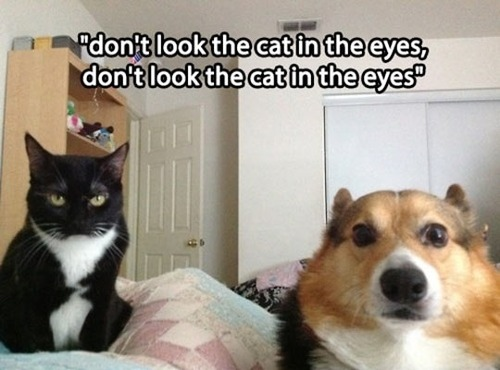 Don't look the cat in the eyes