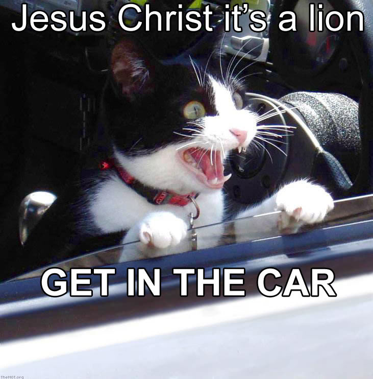 It's a lion get in the car