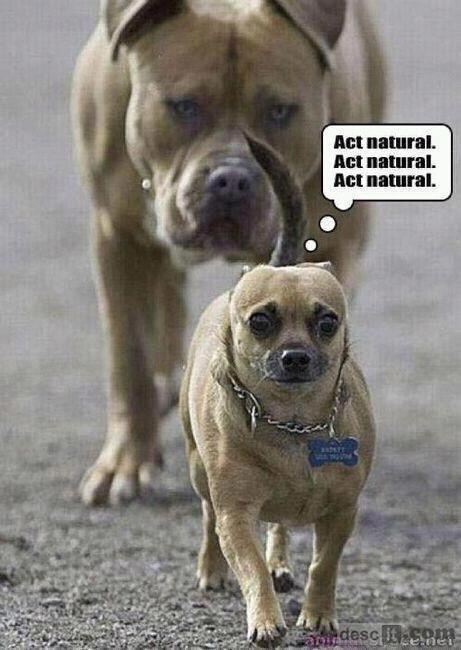 Act natural dog