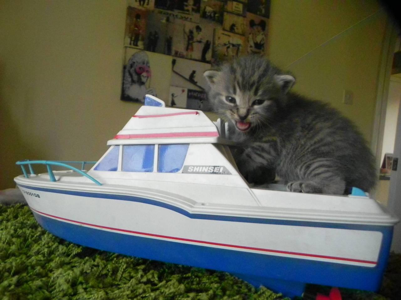 Cat living the dream
