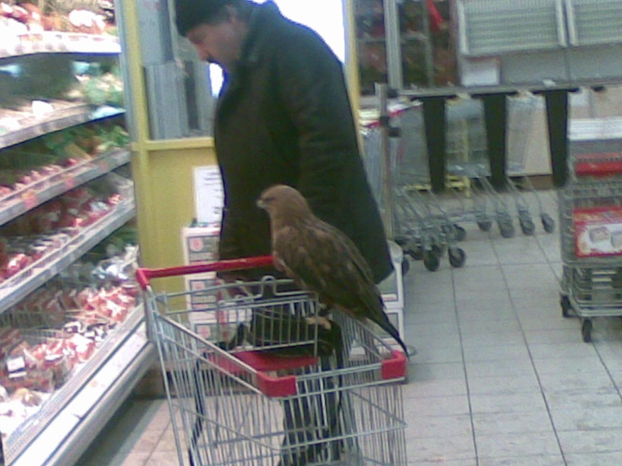 Falcon lunch