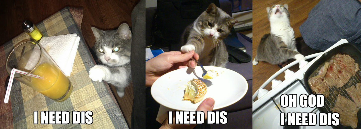 I need dis cat