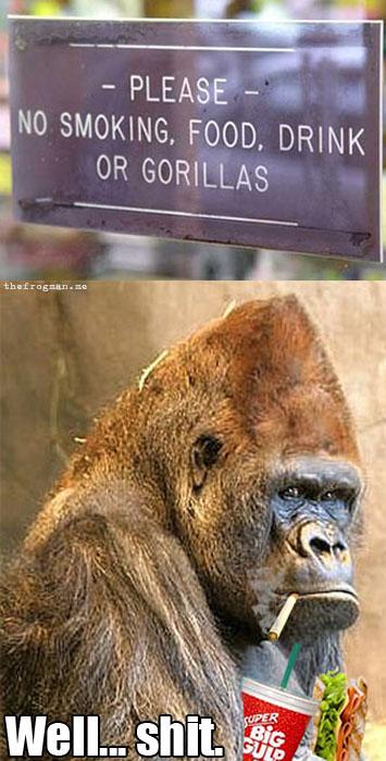 No smoking, food, drink or gorillas