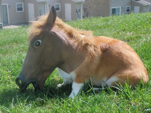 Horse head dog