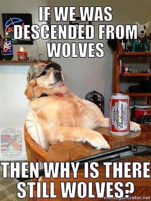 If we was descended from wolves then why is there still wolves?