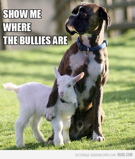 Show me where the bullies