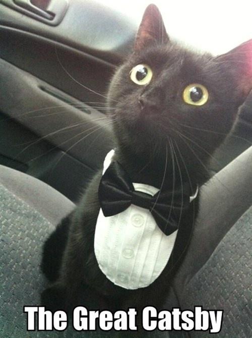 Black cat dressed up