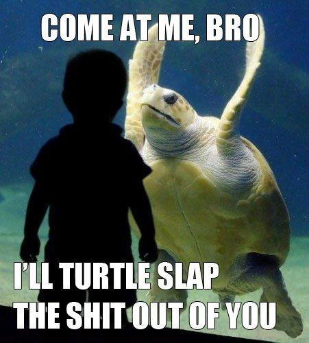 Come at me bro I'll turtle slap you