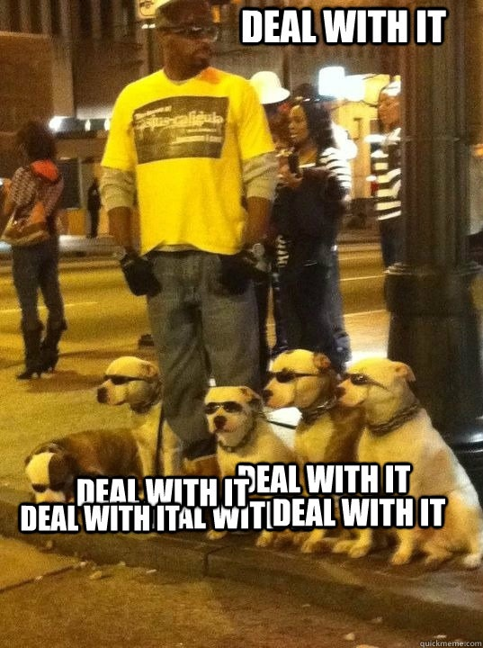 Deal with it dogs
