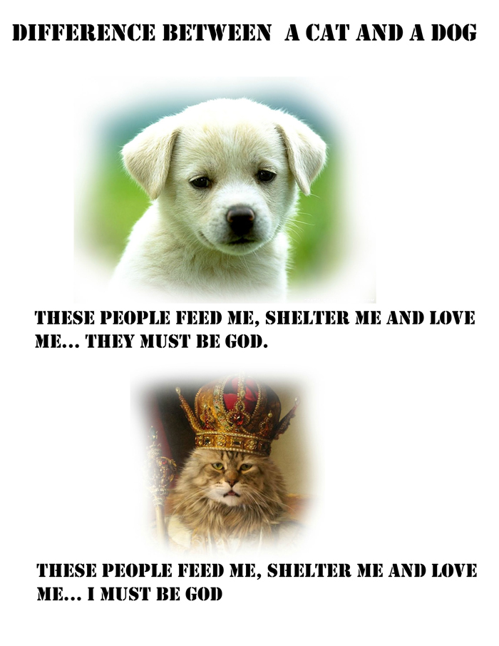 Difference between cat and dog
