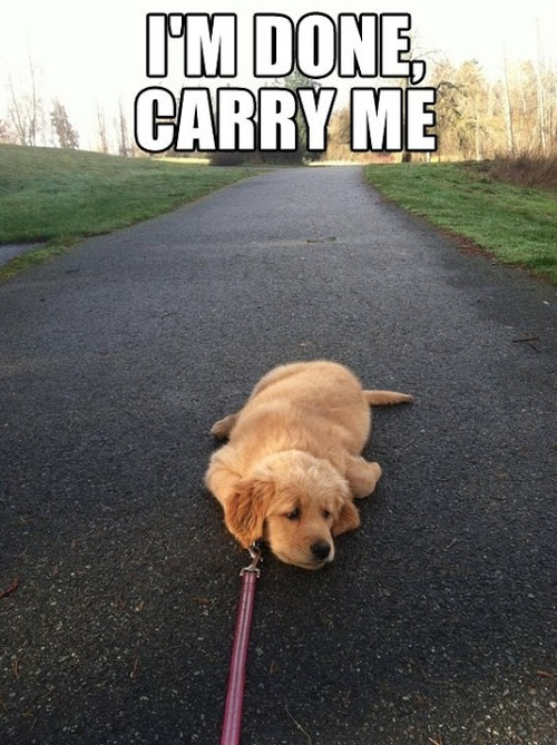 I'm done carry me dog
