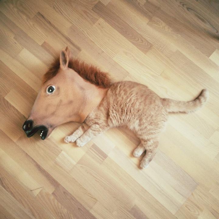 Horse head cat