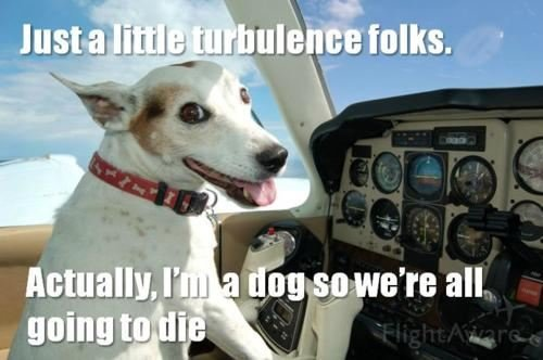 I'm a dog so we're all going to die