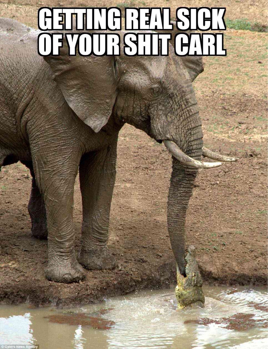 Getting real sick of your shit Carl