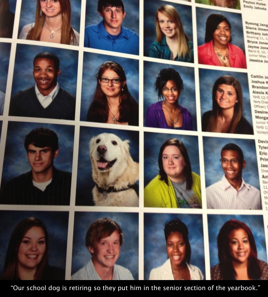 Our school dog is retiring so they put him in the senior section of the yearbook