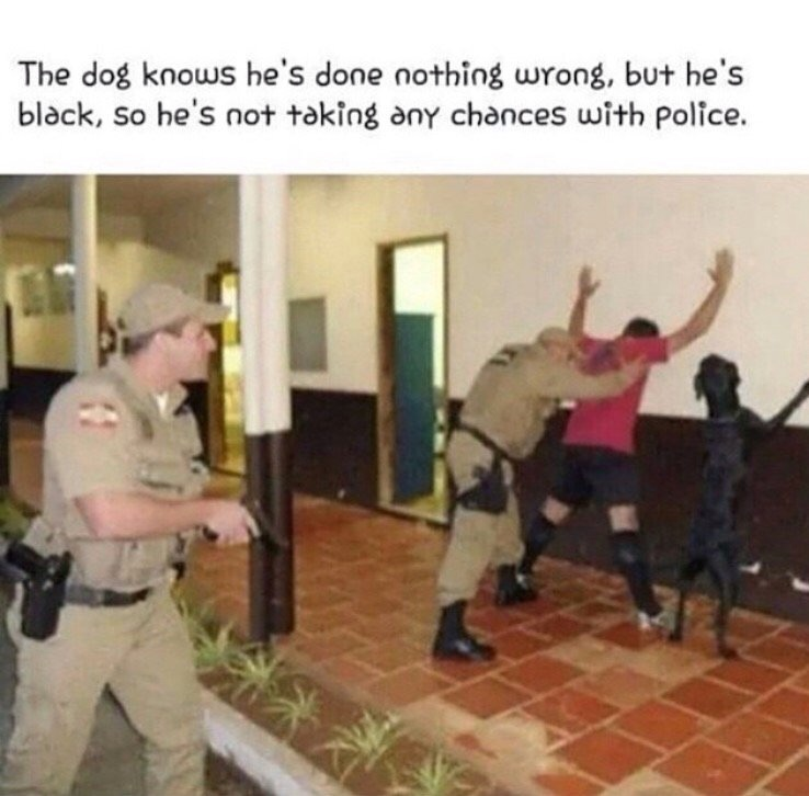 The dog knows he's done nothing wrong, but he's black, so he's not taking any chances with police