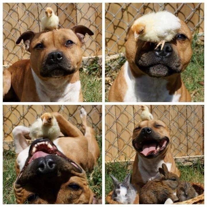 Dog having a wonderful time with chicks and bunnies