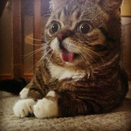 Cat derp tongue