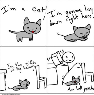Cat hallway