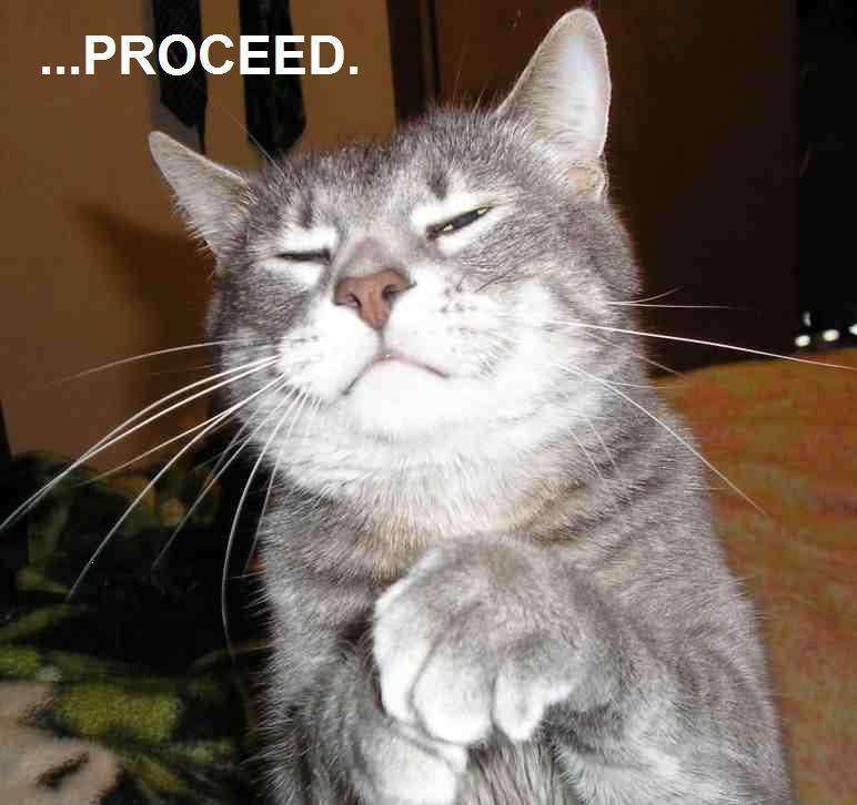 Proceed cat